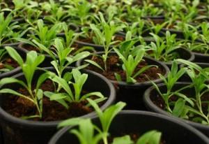 fertilizer-plants