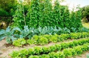 liquid-fertilizer-organic-for-vegetables